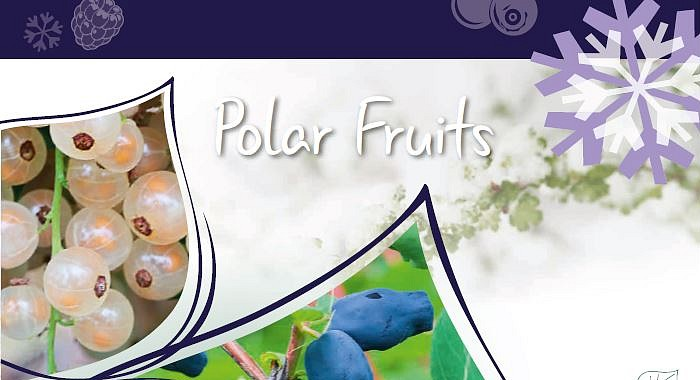 BCM Polar Fruits